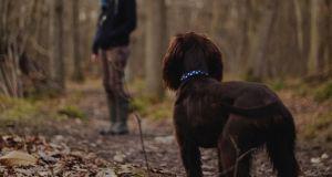 Hundebestandsaufnahme