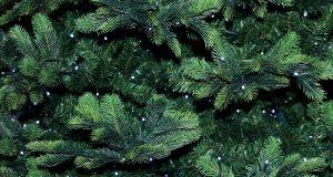 Weihnachtsbaumentsorgung