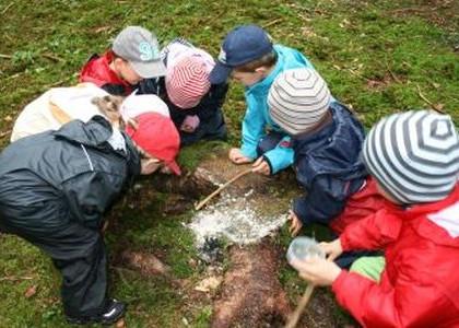 Entdeckungen im Wald untersuchen