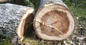 Zwei Hälften eines Baumstammes