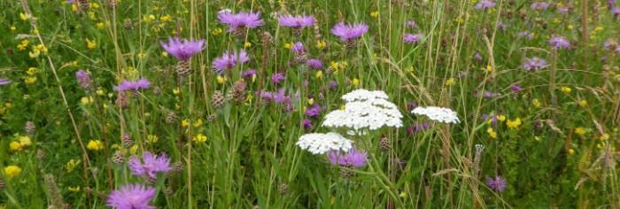 Blühflächen am Gewerbering