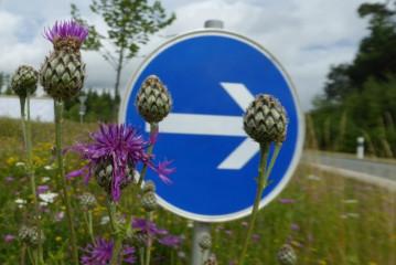 Blühflächen in Holzkirchen_2
